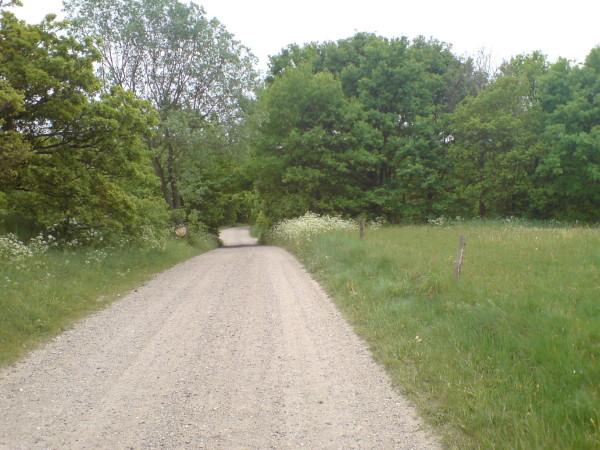 Bild: Schotterweg vor Abzweig nach Givskud Amelia Fahrrad